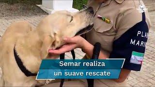Marina rescata a perro atrapado en inundación de Tabasco