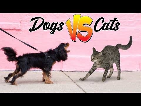 DOGS VS CATS - What's the better pet to have?