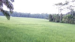 Lagu Melayu - Tuanku Tambusai