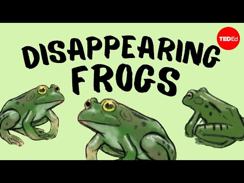 Video image: Disappearing frogs - Kerry M. Kriger
