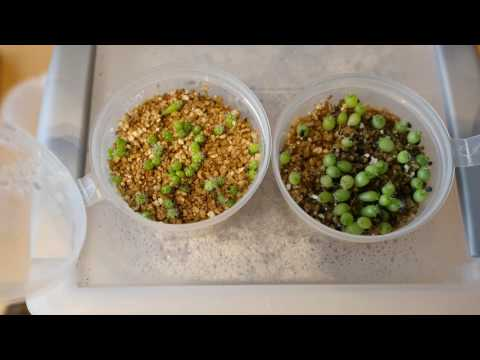 How We Do It: Growing Cacti From Seed