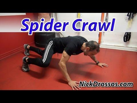 Spider Crawl