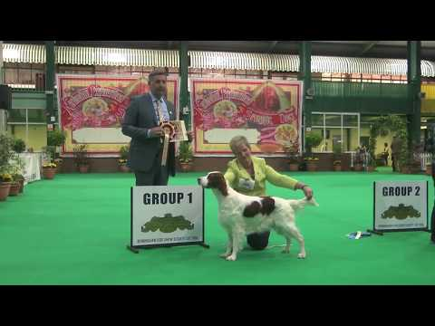Birmingham National Dog Show 2017 - Gundog group