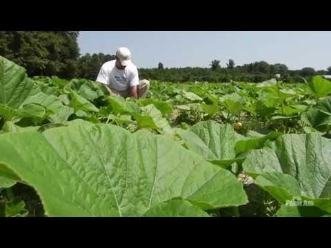 Farmer Profiles: Russ Vollmer