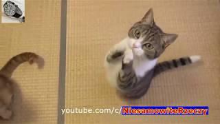 FUNNY CAT SO CUTE 😻😹😼😺