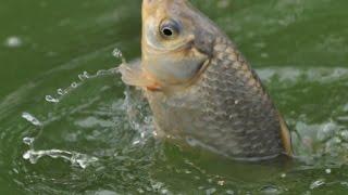 рыбалка в Омске на карасей.