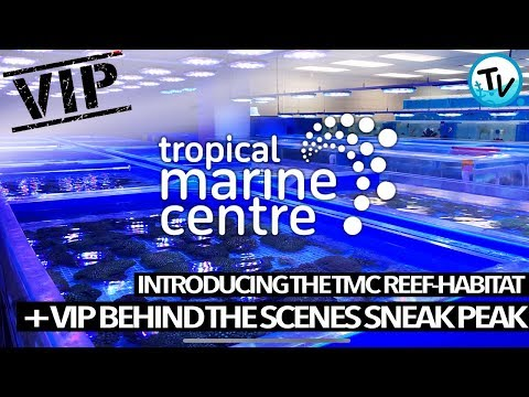 BEHIND THE SCENES AT TROPICAL MARINE CENTRE