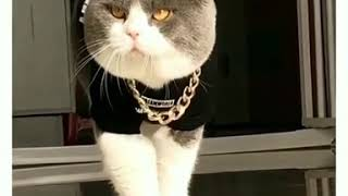 Воровской Кот