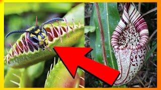 7 Af Jordens Kødædende Planter