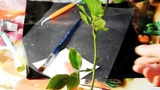 Стебель розы из холодного фарфора(Это мастер класс как сделать стебель розы из холодного фарфора, показано сразу 2 метода, при помощи тейп-лен..., 2015-02-07T13:45:46.000Z)