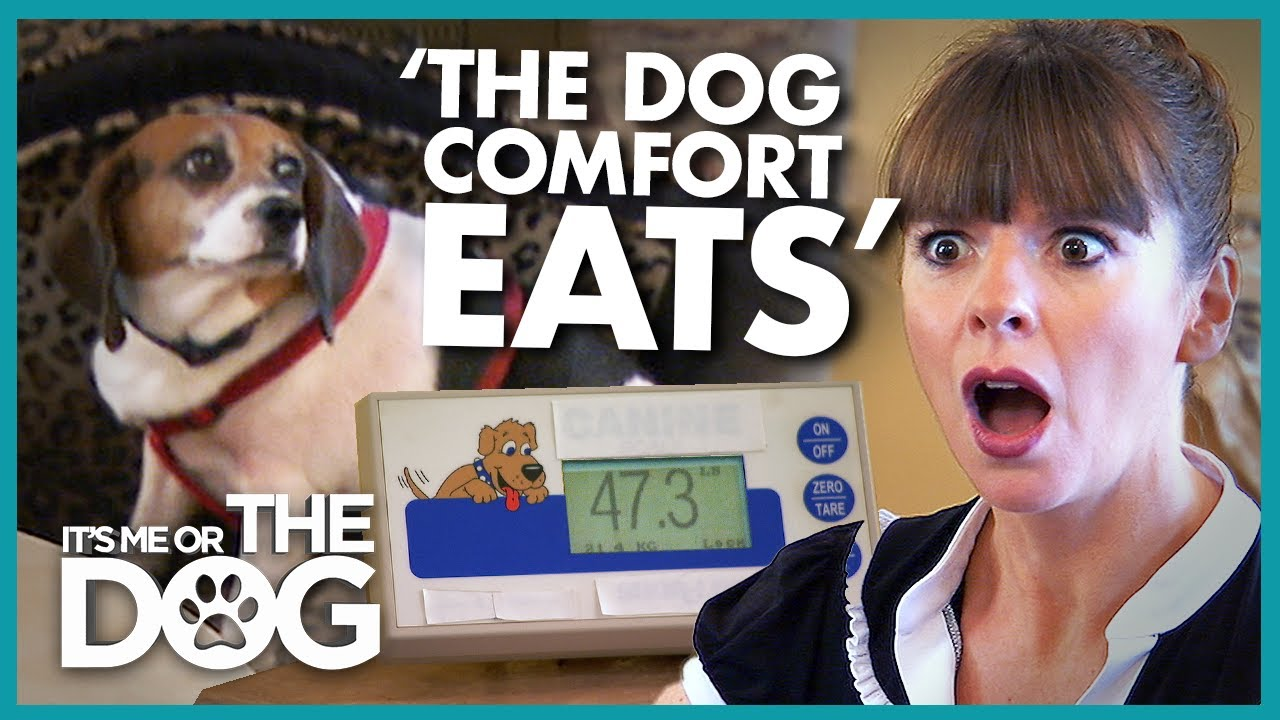 Owner Blames Dog's Weight on 'Stress' and 'Comfort Eating' | It's Me or The Dog
