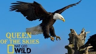 Eagle Documentary National Geographic Full QUEEN OF THE SKIES