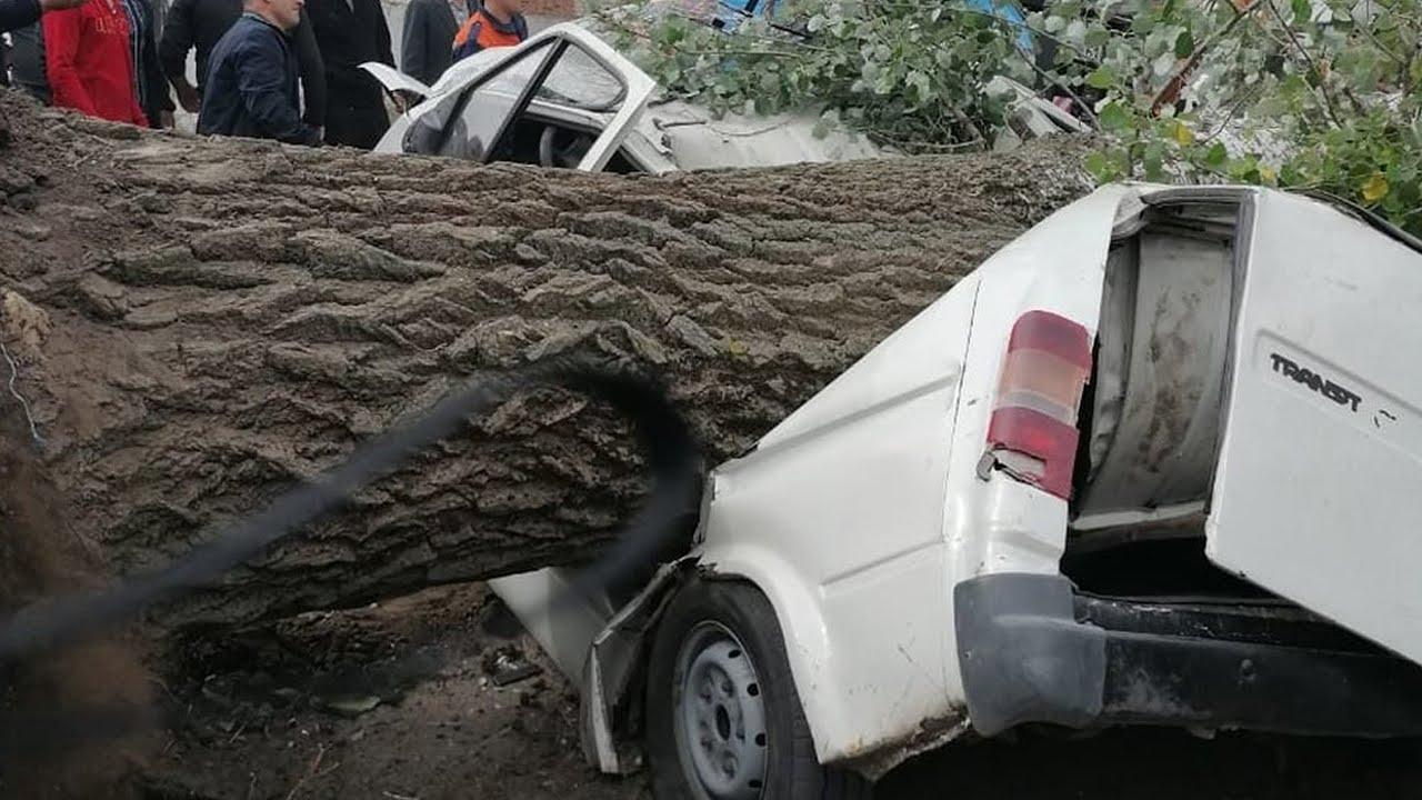 Деревья падали на машины крыши срывало Шторм в Калинграде