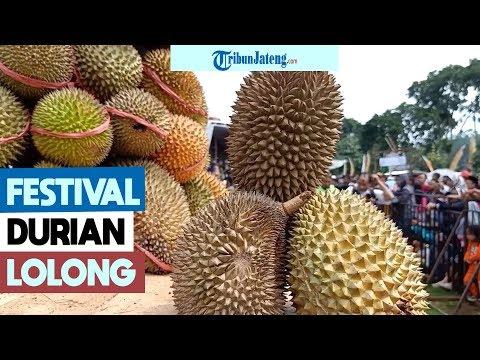 festival-durian-lolong-promosi-wisata-kabupaten-pekalongan