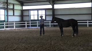 How to Dance with Your Horse in a Combination Exercise | Groundwork Series 6/6  Exercise#5 The Dance