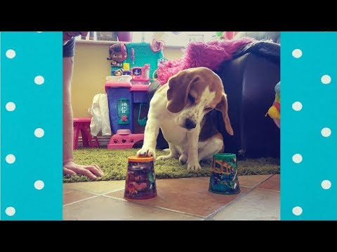 Smart Dogs  Playing Shell Game | Funny Pets Video Compilation
