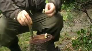Csiga elkészítése a dudvában