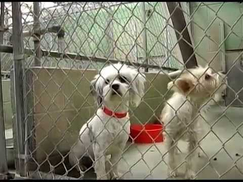 Central California SPCA