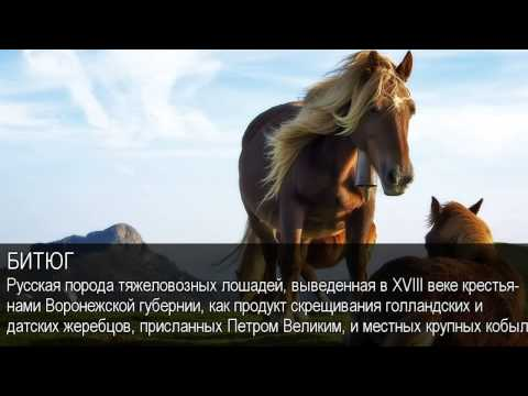 Русские словари рифмы, синонимы, эпитеты, значения слов