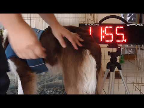 Heat stress in dogs - do cooling vests actually help?