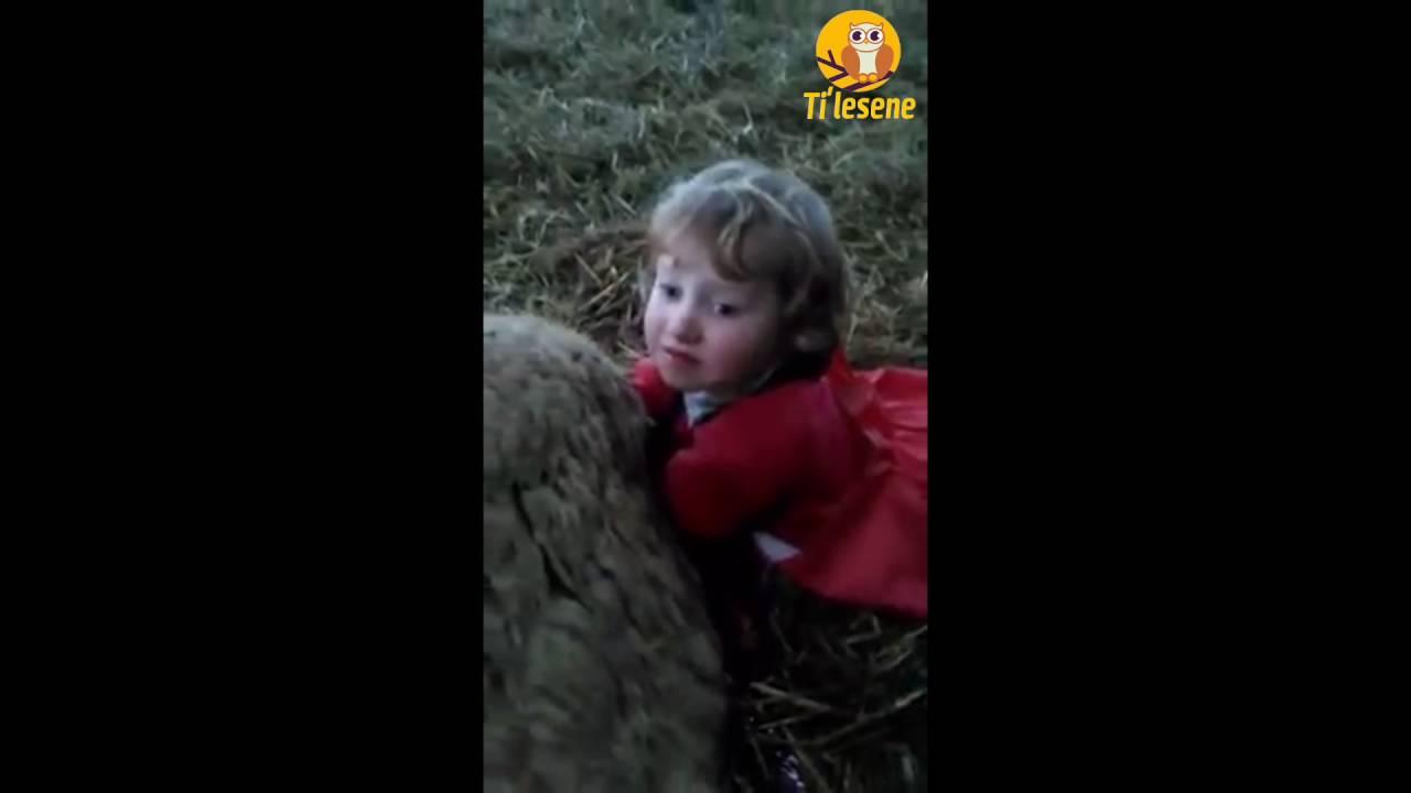 Koyuna dogum yaptiran çocuk