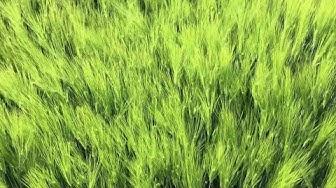 Relax. Sich im Grün versenken und mal an nix denken ;)