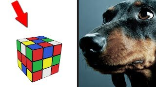 Funny Game for Dogs. Diy for pets. Nika crafts project. How to