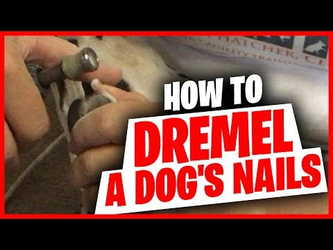 How to Dremel a dog's nails.