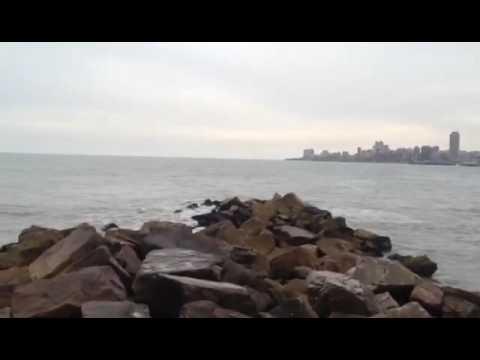 10 Ahora   Orcas en las playas de Mar del Plata