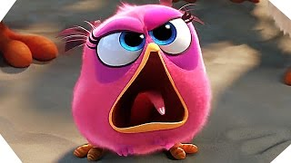 Video THE ANGRY BIRDS Movie NEW Trailer (2016 - Animated Film) download MP3, 3GP, MP4, WEBM, AVI, FLV September 2018