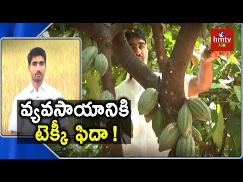 Cocoa Cultivation | Young Farmer Shares His Cultivation Expe