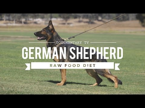 GERMAN SHEPHERD DOGS AND A RAW FOOD DIET