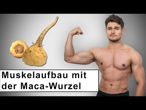 Muskelaufbau mit Hilfe der Maca Wurzel!