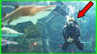 SHARK SWIMMING IN GIANT AQUARIUM!