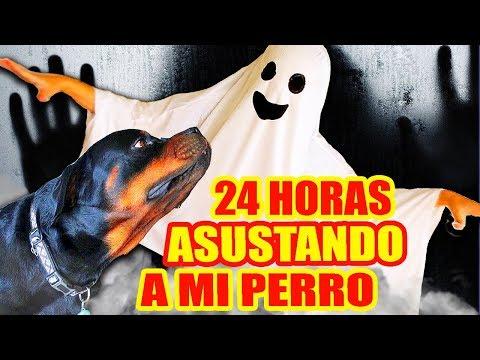 24-horas-asustando-a-mi-perro!-rottweiler-reaccionando-a-juguetes-de-terror!-reto-sandraciresart