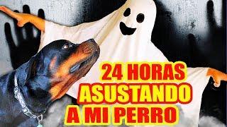 24 HORAS ASUSTANDO A MI PERRO! ROTTWEILER REACCIONANDO a JUGUETES de TERROR! RETO SandraCiresArt