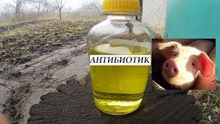 Свиньи  Применение антибиотиков