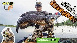#ตกปลา #ชะโดป่า (ตอนที่ 110) ชะโดป่ากัดเหยื่อผิวน้ำโคตรมันส์ มีแต่ไซร์ใหญ่ๆ  #pong posamton