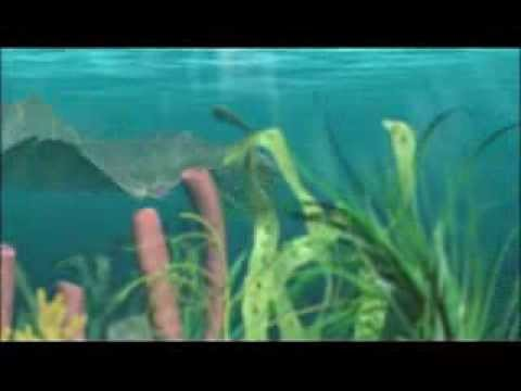 The Cambrian explosion 1