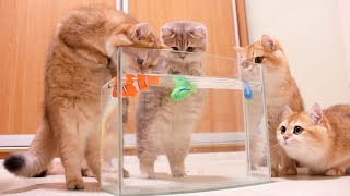 Kittens and Cats learn Сatches FISH.  Too funny |Too cute