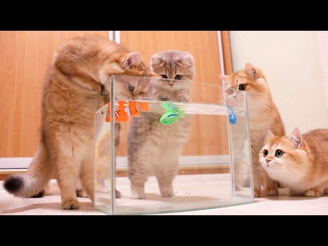 猫は魚を捕まえる 🐟🐠