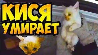 Download Замороженный котёнок. Успеют ли спасти? Добрые поступки Mp3 and Videos