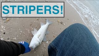 Open Beach Spring Time Stripers - Striped Bass Fishing Long Island NY