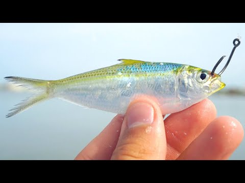 Fishing With Live Greenbacks Tampa Bay Inshore Slam