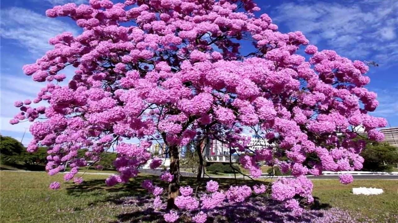 Beautiful tree not green (HD1080p) - YouTube