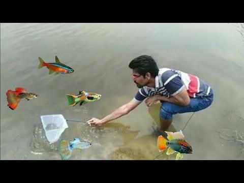 River Fishing | Catching River Fish For Aquarium In Tamil