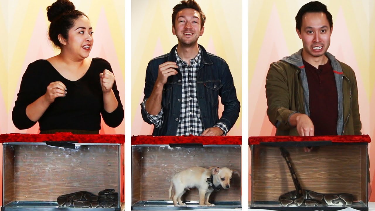 Mystery Box Challenge: Snake Or Puppy