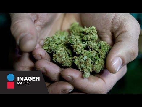 ¿Cómo será regulado el uso recreativo de la marihuana? / Primera Emisión