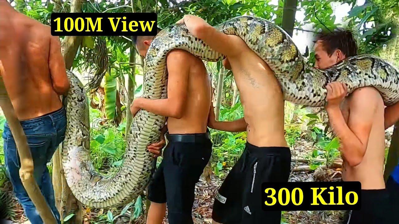6 Thanh Niên Đối Đầu Trăn Tinh Khổng Lồ 200 Kg Ăn Thịt Người | Giant python