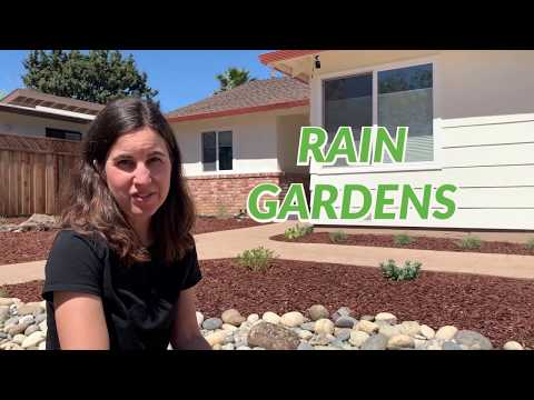 Capture water with a rain garden and get a rebate!